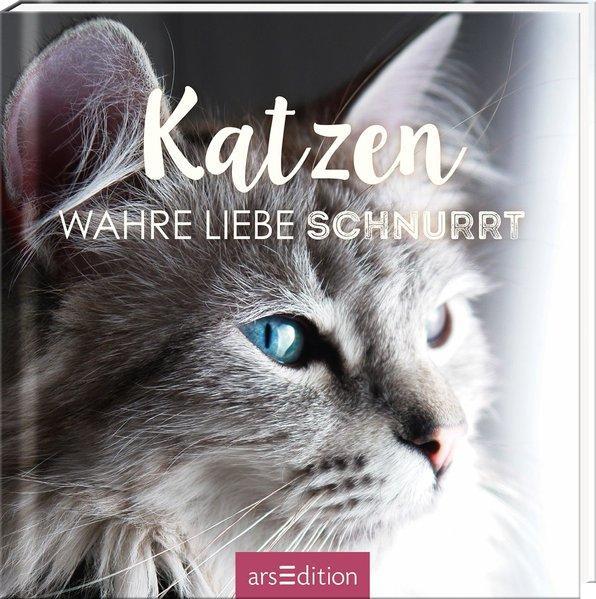 Katzen - Wahre Liebe schnurrt